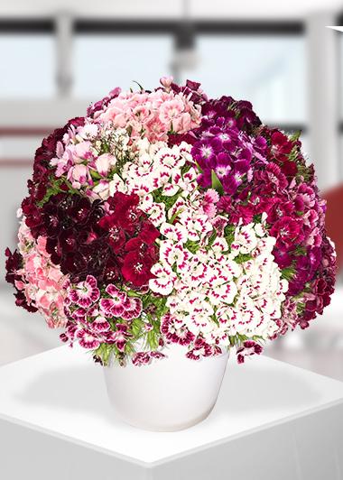 Kelimelerle Anlatılmaz Gaziantep Çiçekciler