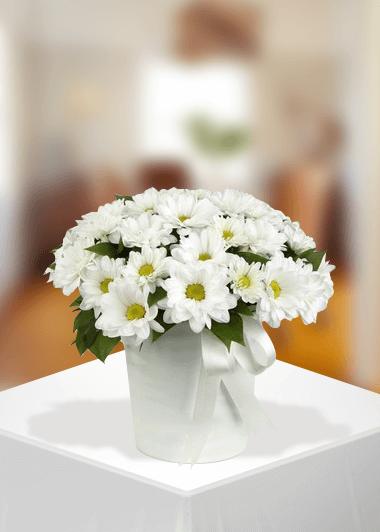 Beyaz Papatyanın Zerafeti Gaziantep Çiçek Sepeti Siparişi