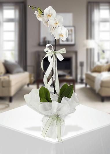 Her Zaman Tek-63 Gaziantep Çiçekciler