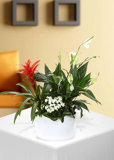 Özel Tasarım-74 Gaziantep Çiçekciler