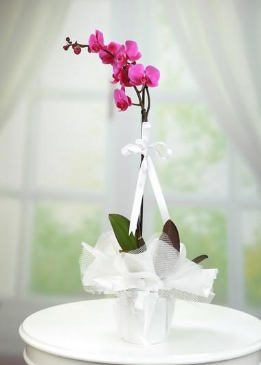 Tekli Mor Orkide  Gaziantep Çiçek Sepeti Siparişi